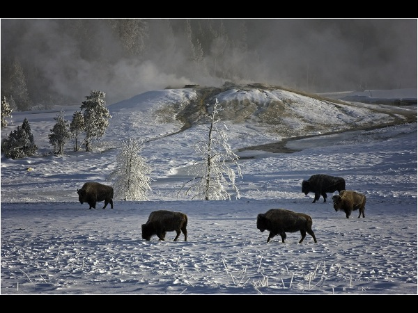 england_john-chamberlin-frps-mfiap_winter-in-yellowstone_digital-phototravel_commended