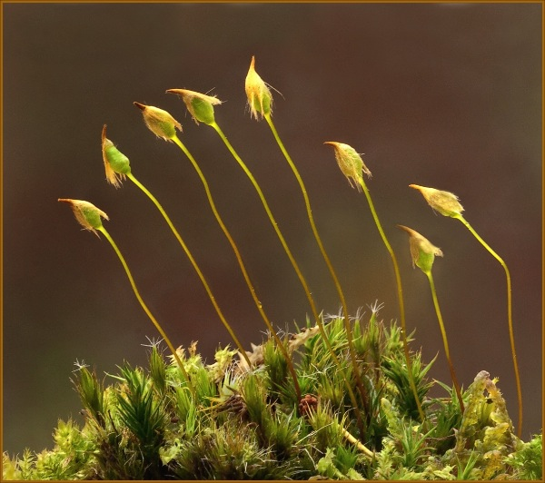 england_paul-forster_polytrichum-commune_digital-nature_highly-commended