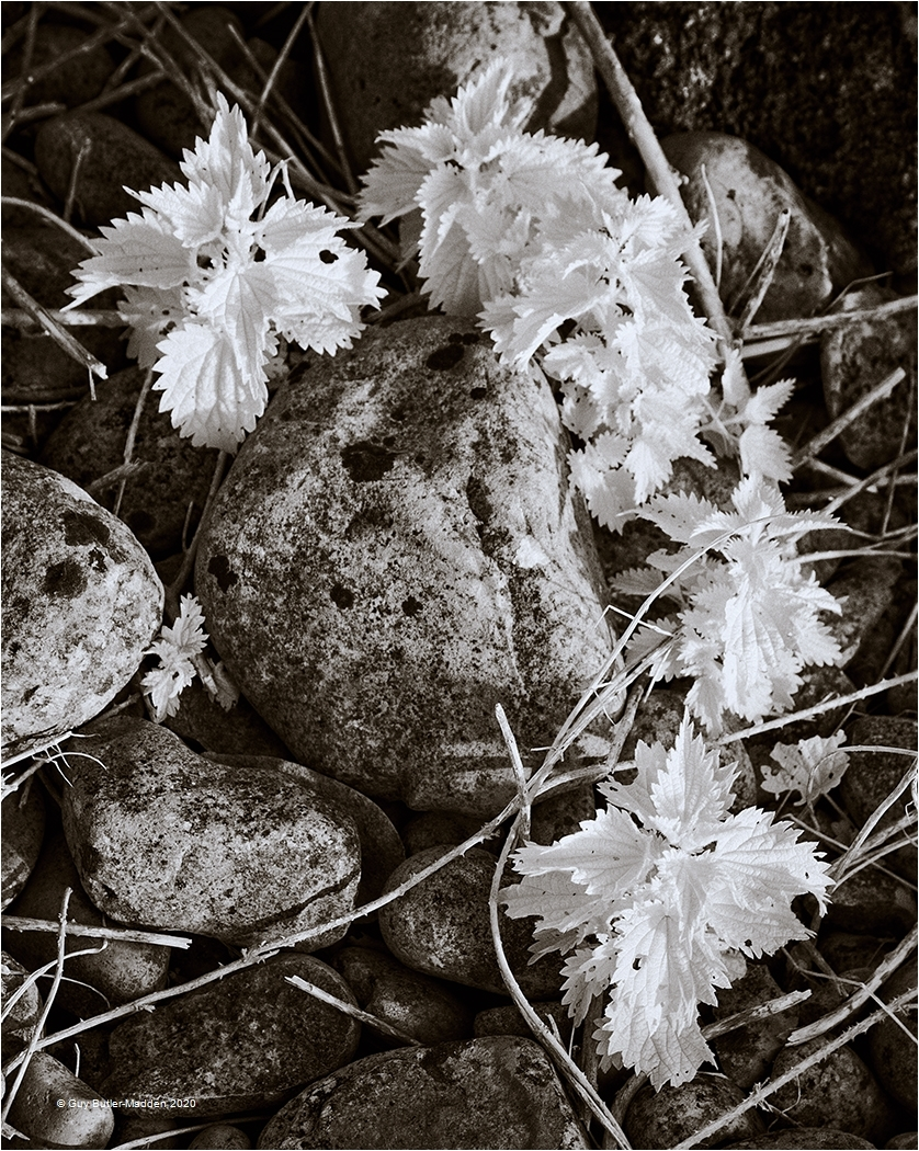 Guy-Butler-Madden_Vale-Photographic-Club_Nettles-and-Pebbles