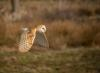 A3_Janette Hill_Barn Owl_GB