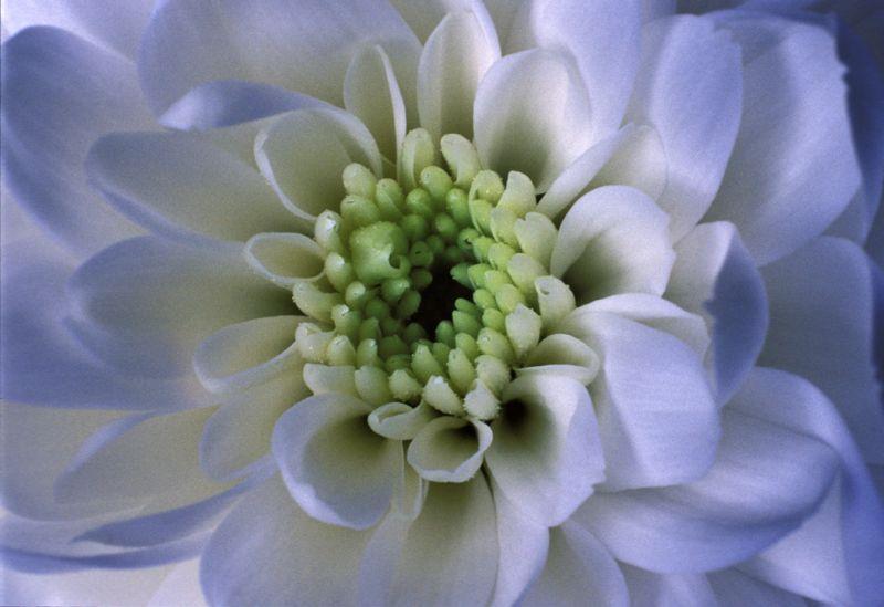 Crown of Green_1.jpg