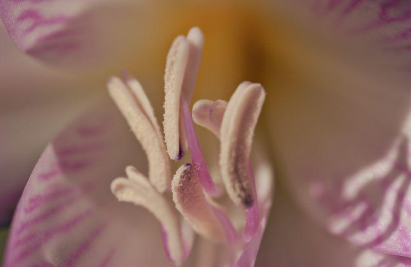 Pink Lily_1.jpg