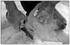 Shearing (AWPF Panel no 2).jpg