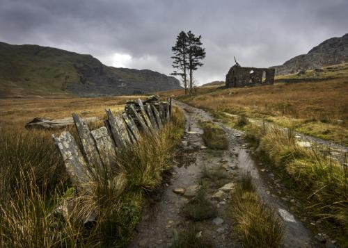 05-cwmorthintree-and-ruin-snowdonia-north-wales