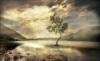 The Golden Lake.jpg