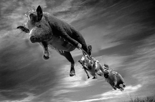 105-Pigs-Might-Fly.jpg
