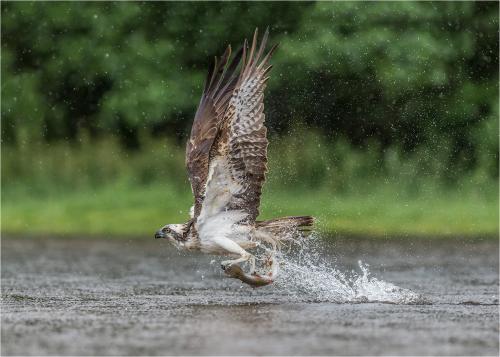 314-Osprey-Takeaway.jpg