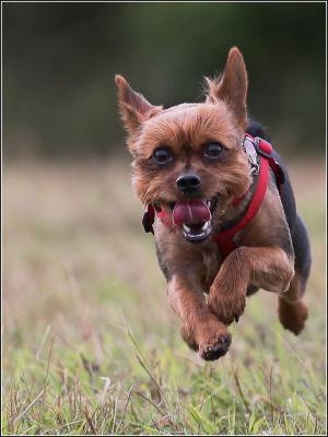 430-Flying-Dog.jpg
