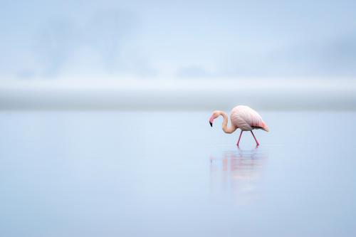 407 Pretty-Flamingo.jpg