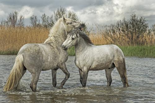 428 Wild Horses.jpg