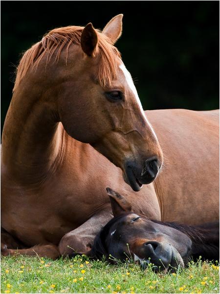 Two Horses - Companionship