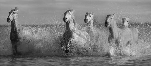 312br-sea-horses