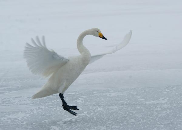 328br-swan-landing
