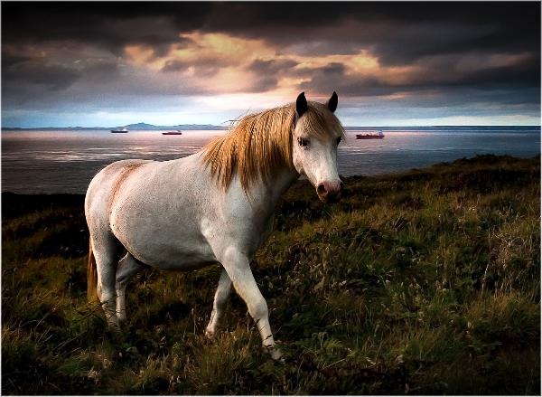 86am-wooltack-pony