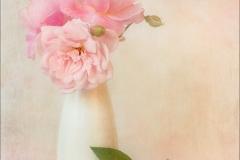 Christine-Tidman-AWPF-EFIAP-CPAGB-BPE1_Gwynfa-Camera-Club_Summer-Roses