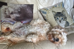 Harry-Gardiner-AWPF_Tenby-District-Camera-Club_Canine-Sofa-Surfing
