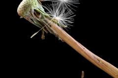 John-White_Aberdare-Camera-Club_Wind-Blown-Seeds