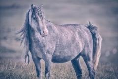 Michael-Halligan_Tenby-District-Camera-Club_Preseli-Wild-Pony