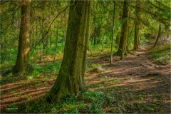 Nigel-Goode-LRPS-EFIAP_Cwmbran-Photographic-Society_Dawn-in-the-Woods