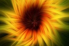 Susan-Ashford-ARPS-CPAGB-EFIAP-AWPF_Swansea-Camera-Club_Sunflower