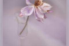 Susan-Surridge_Baglan-Bay-Photographic-Society_Graceful-to-the-End