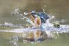 11-Making a splash.jpg