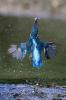 6-Blue blue electric blue.jpg