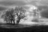 4_winter mist_Peter Stickler.jpg