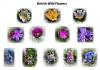0 British Wild Flowers.jpg