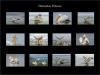 00 AWPF Pelican display Layout.jpg