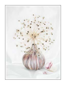 06 Vase With Allium Seedhead.jpg