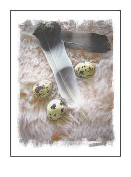 09 Feathers Eggs.jpg