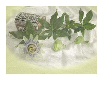 11 Passion Flower Box.jpg