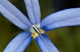 Blue star_1.jpg