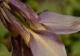Purple Paradise_1.jpg