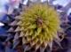 Urchin_1.jpg