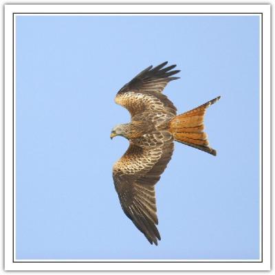 3 kite in flight .jpg