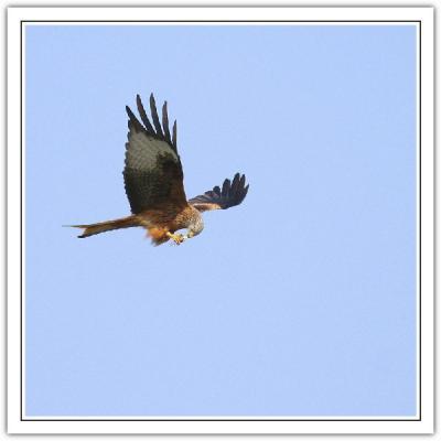 _5 kite in flight 21.jpg