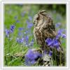 12 owl b bells1.jpg