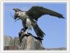 _4 Ripping bird.jpg