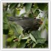 _9 BLACKBIRD.jpg