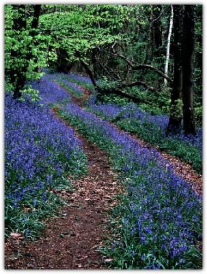 08 Path Through the Bluebell Wood.jpg