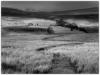 04 Pathway to the Beacons bw.jpg