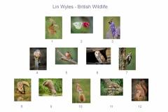 00-British-Wildlife-copy