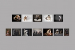 00-Marcia-Mellor-Hanging-Panel-Pets-AWPF