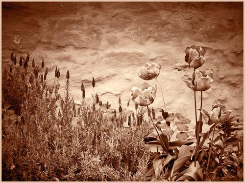 108-Faded-flowers.jpg