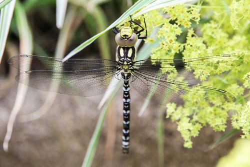 132-Dragonfly-at-rest.jpg