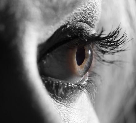 220-Eye.jpg