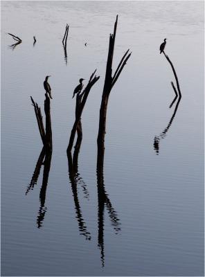 231-Birds_on_sticks.jpg