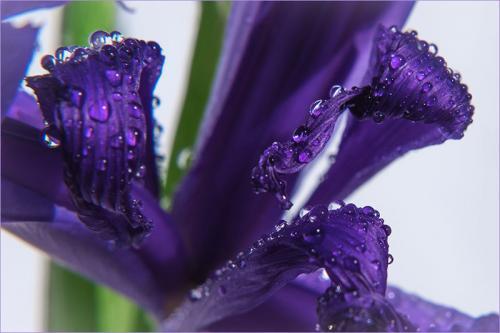 302-Abstract-Iris.jpg